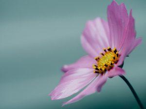 flower-muriel-van-hoek